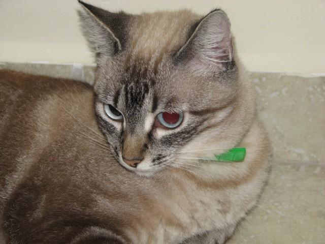 Adotar um animal abandonado é uma forma de homenagear São Francisco de Assis no dia 4 de outubro