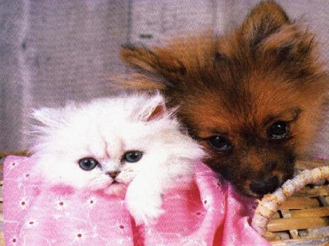 Hotéis, no Brasil e no exterior, oferecem um atendimento especial aos pets