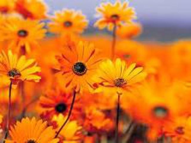 Durante o outono as plantas exigem cuidado redobrado