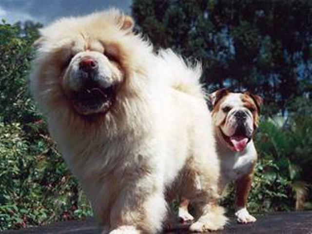 Cães idosos estão mais propensos a desenvolverem doenças oculares