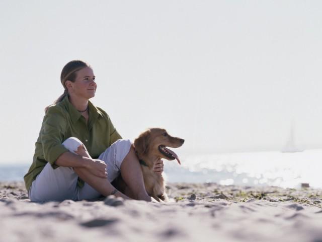 Férias com seu animal de estimação exigem cuidados específicos