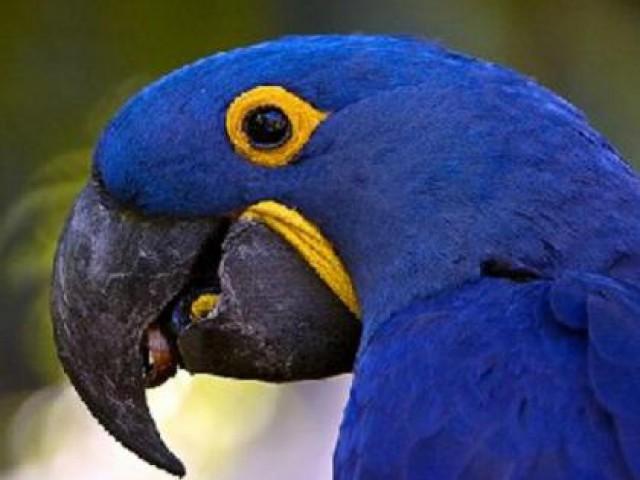 No dia 28 de abril será comemorado o Dia Nacional da Caatinga