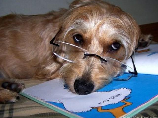 Doenças oftalmológicas podem levar os animais á perda da visão