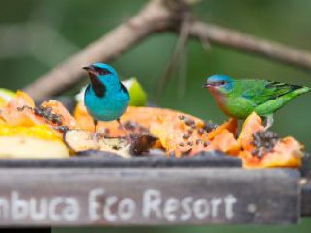 Temporada para Birdwatching começa agora