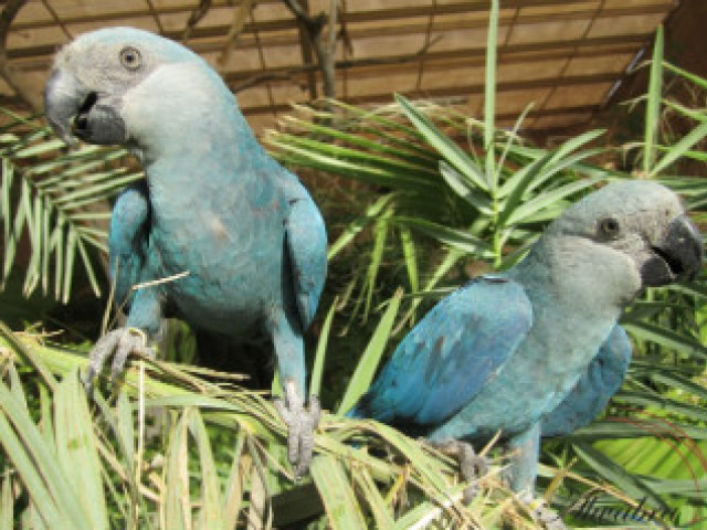 Instituto Arara Azul lançou a campanha Adote um Ninho